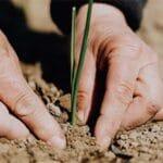 Gardening For Seniors: 6 Tips To Make it Easier