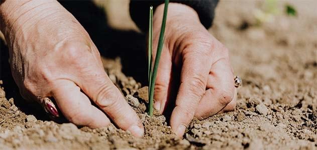 6 tips for easy gardening for seniors