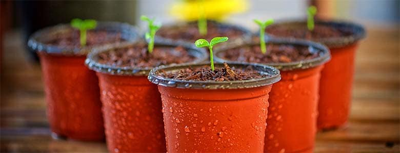 Tips and trick for beginners: how to grow your vegetables in pots