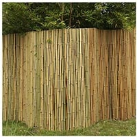 bamboo to create a privacy in backyard